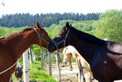 pferdekuscheln.jpg