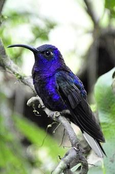 hummingbird-1434391_340.jpg