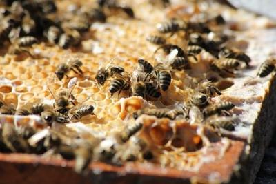 bees-3601859_340.jpg