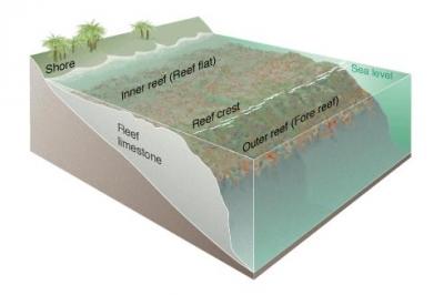 coral_reef_diagram.jpg