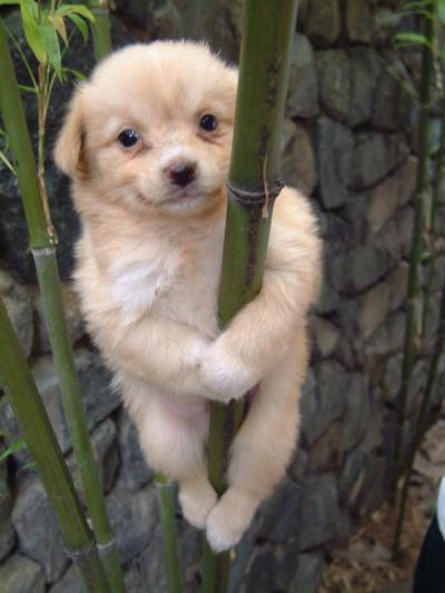 kletterhund.jpg