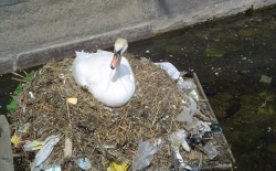 Bild: pollution_swan.jpg