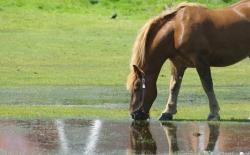 Bild: pferd.jpg