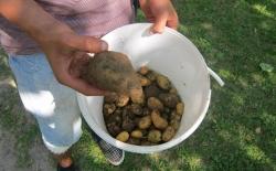 Bild: kartoffelnausdemsack.jpg