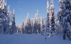 Bild: finnland_2012_095.jpg