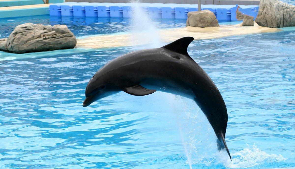 wie hoch springen delfine