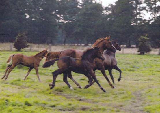 Fortpflanzung Pferde