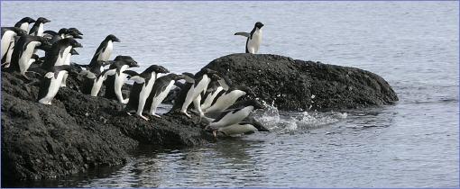 pinguine berleben am s dpol. Black Bedroom Furniture Sets. Home Design Ideas