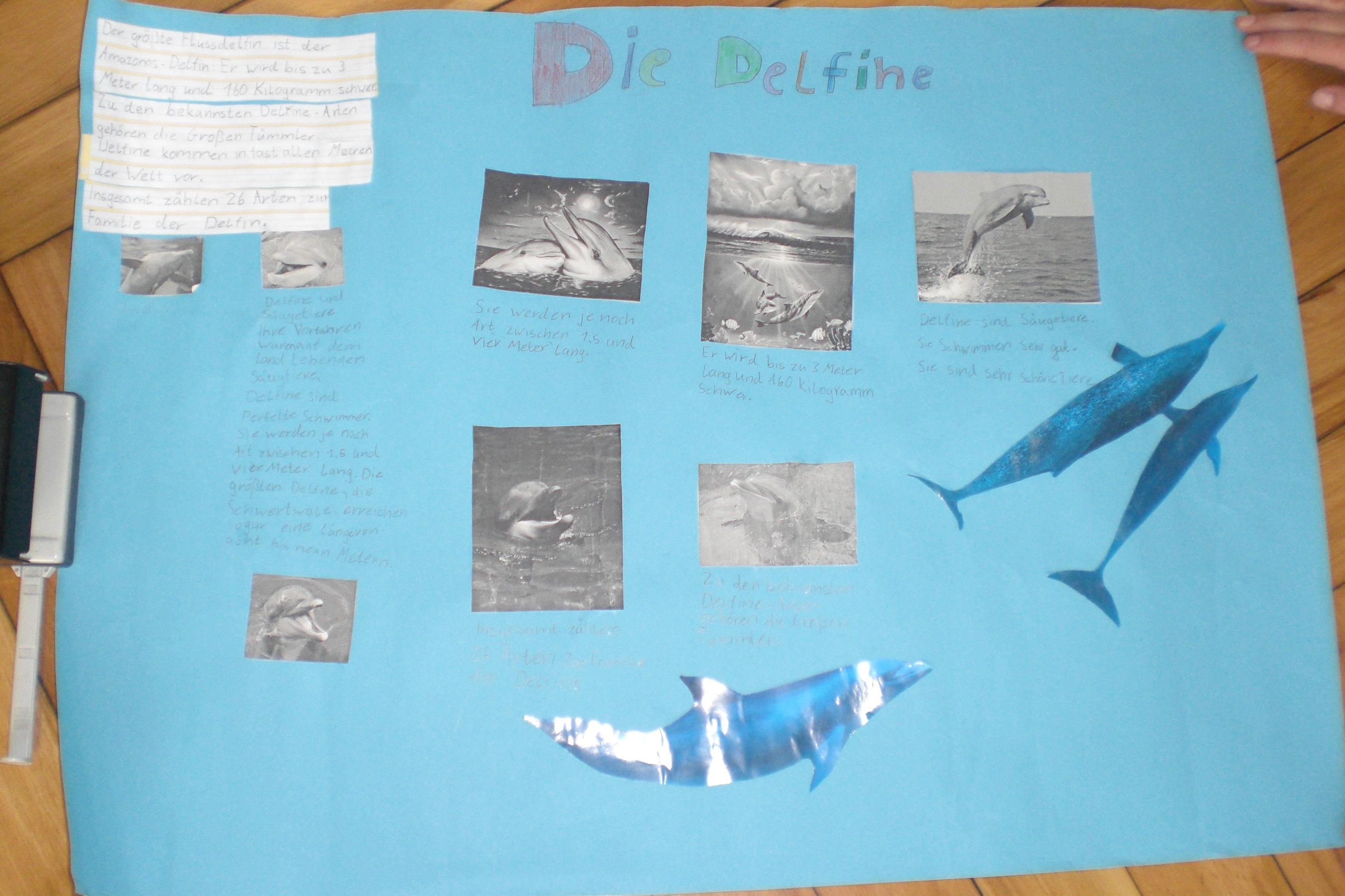 Stadtschule alsfeld unsere plakate im sachunterricht for Fressen kois kleine fische